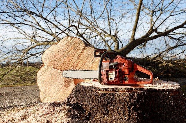 Trädfällning Uddevalla