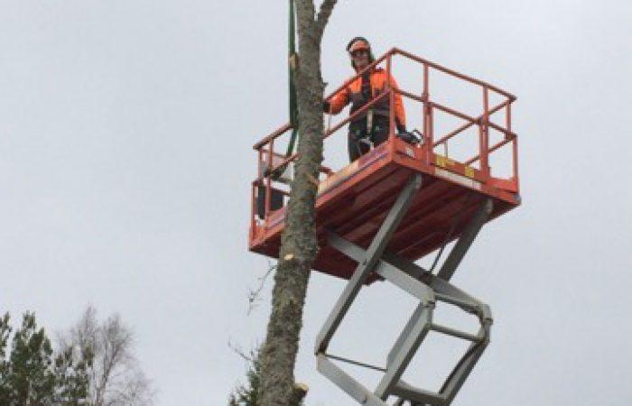 Trädfällning med kranbil skylift